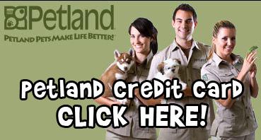 Puppy Financing - Visit us at Petland Orlando South, Florida!