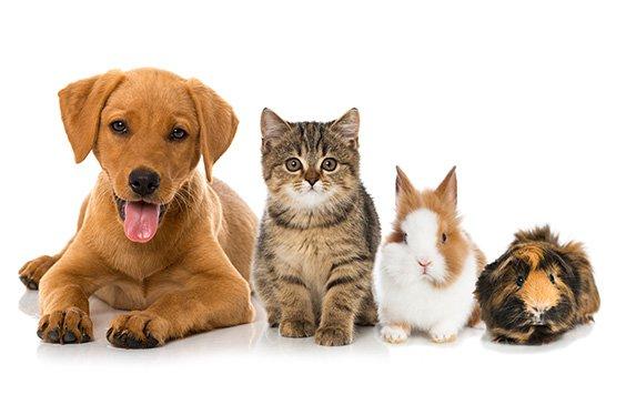 Health Extension Dog Food Petland