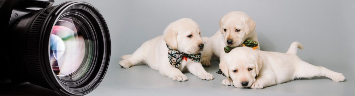Puppy Photo Gallery