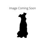 Petland Orlando South Redbone Coonhound